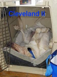 Cleveland in the Kennel