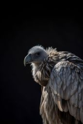 Vulture in profile Photo by Markus Spiske on Unsplash