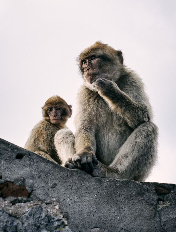 a momma monkey and her child