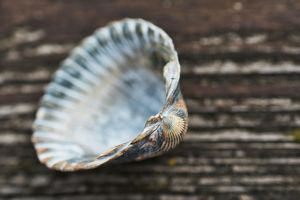 Shell a halfshell Photo by Regine Tholen on Unsplash shell