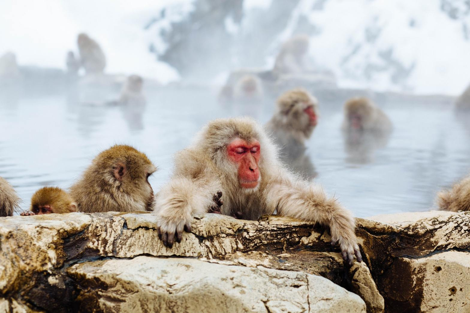 snow monkey fezbot