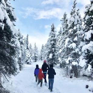 Narnia/Denali National Park