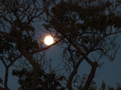 Moon-tree silhouette1