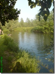 OLIVES AND RIVER 009