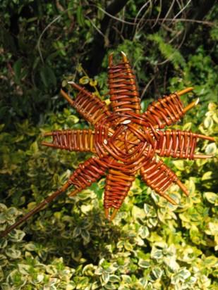 Willow sunflower
