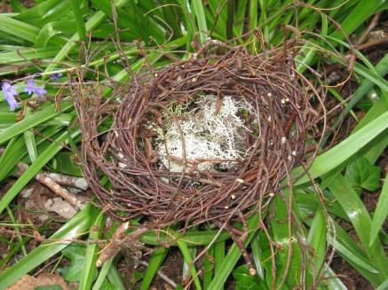 Birch nest with reindeer moss