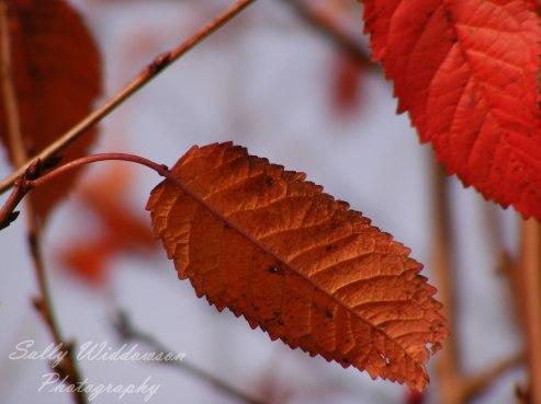 Autumn-Walk-10