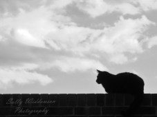Black and white cat silhouette on a wall clouds behind