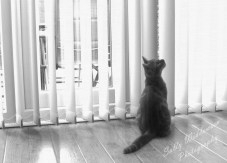 Monochrome ginger kitten in window sitting looking up