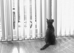 Monochrome ginger kitten in window sitting looking up