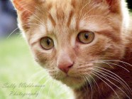 Close up portrait of cute ginger kitten with lovely whiskers for pet photography session