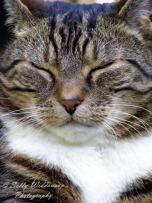 happy tabby cat close up
