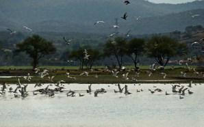 Impulsan limpieza de lirio en Laguna de Yuriria.