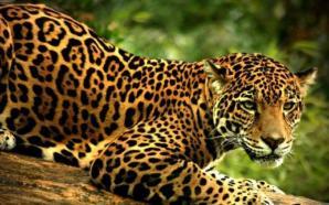 Violencia humana provoca extinción de animales: UNAM