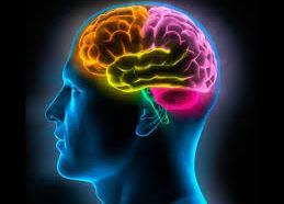 Especialistas localizan parte del cerebro que nos hace pesimistas