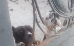 EN EL OLVIDO LA PROTECCIÓN ANIMAL, DENUNCIAN MALTRATO EN CASAS…