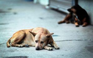 #Estado ANALIZAN INICIATIVA PARA RECONOCER QUE ANIMALES SON «SERES SINTIENTES».