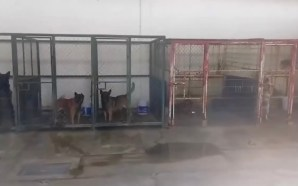 #Salamanca ANIMALISTAS EXIGEN A MUNICIPIO TRANSPARENCIA EN OPERACIONES DE CENTRO…