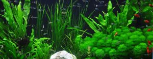 cropped aquatic plant management