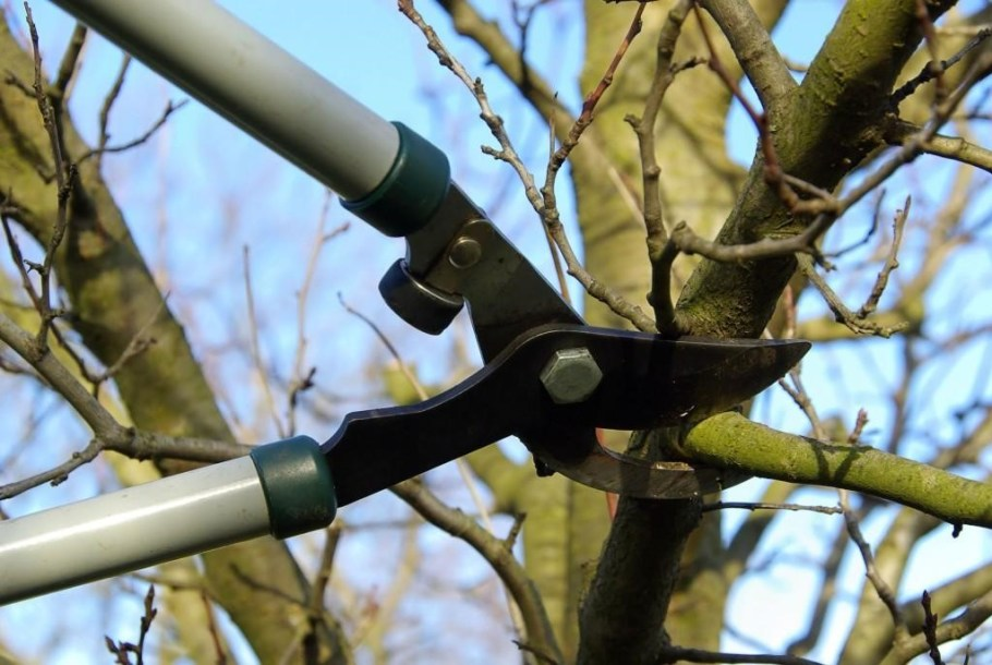 steps tree pruning