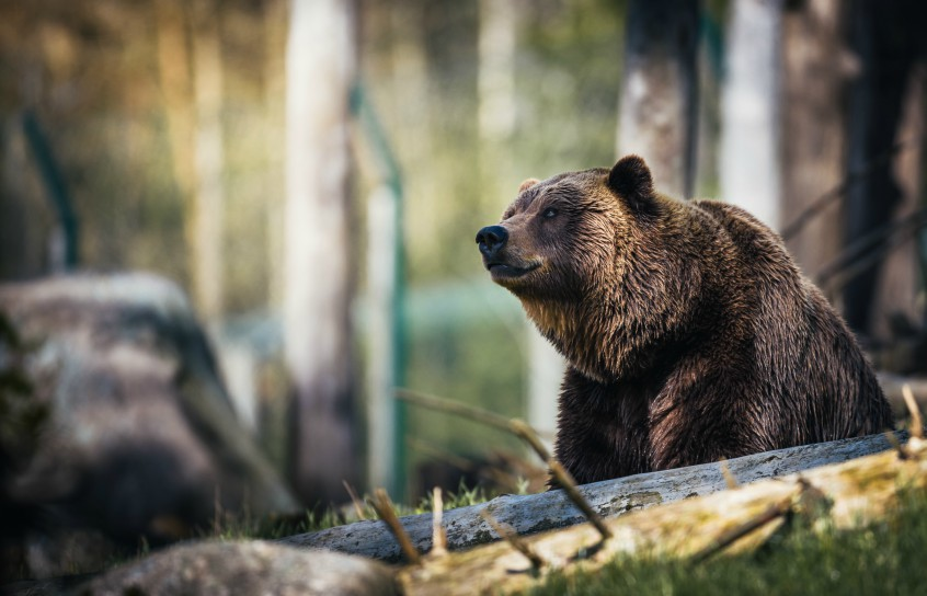 safety precuations wildlife camping