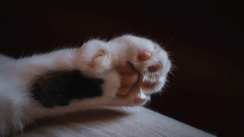 trimming kitten nails