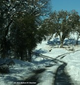 The road as the snow slowly melts