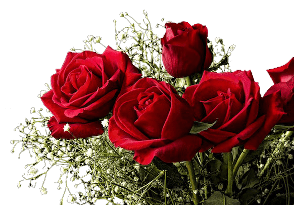 Red-Roses-for-Valentines-Day