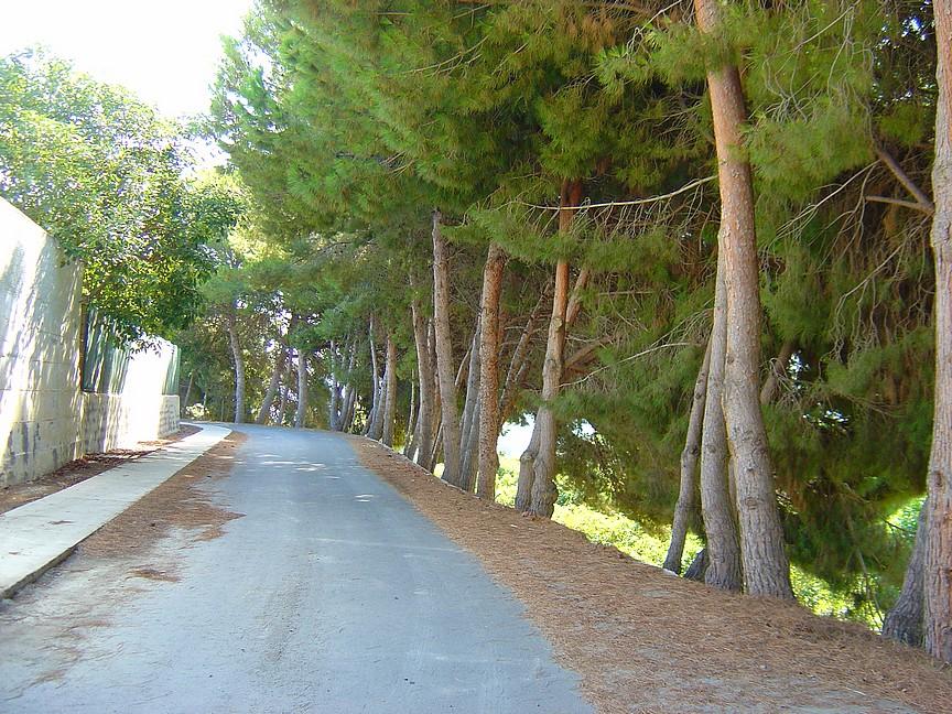 A love wind break made of Pine trees.