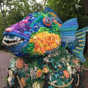 Priscilla the Parrot Fish