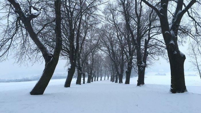 Zimni