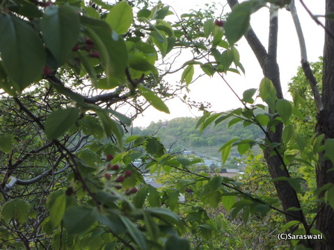 オタモイ竜宮城の唐門を望む