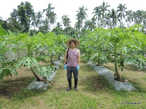 バイオ・ノーマライザー フィリピン農園