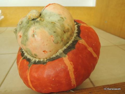 ニセコのかぼちゃ