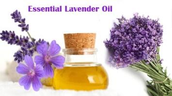lavender_bouquet_1759x1161