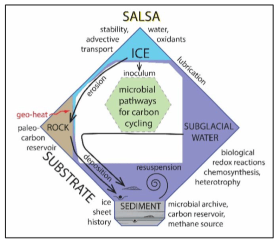 Figure depicting SALSA's hypothesized subglacial carbon cycle
