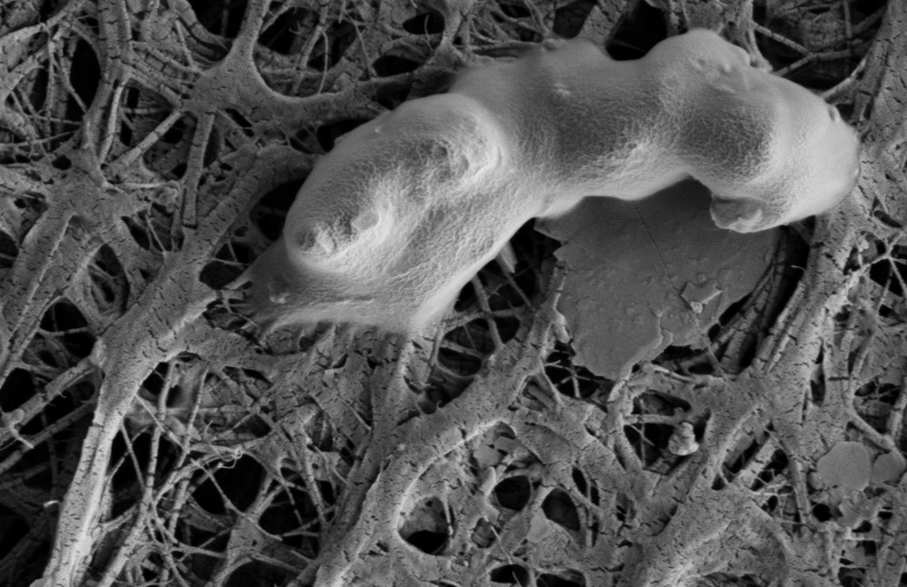 Bacterial Cell From Lake Whillans