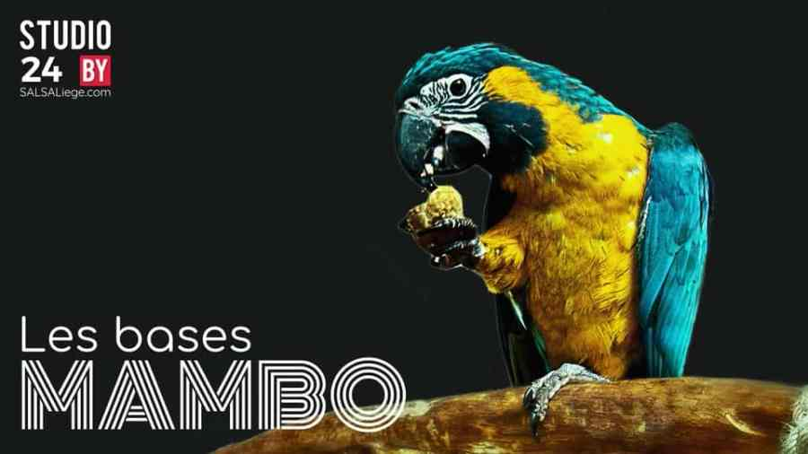 SALSALiege | La nature est l'instinct du Mambo.