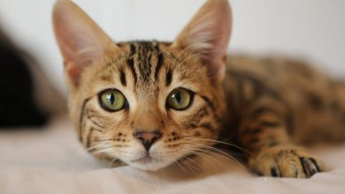 Photo of ¿Tenés gato? Hoy es su día, ¿cómo lo festejás?