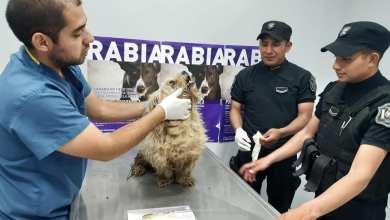 Photo of Dos policías le salvaron la vida a un perro