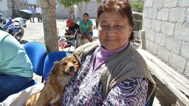 Photo of Vuelven las castraciones y vacunaciones antirrábicas a los barrios