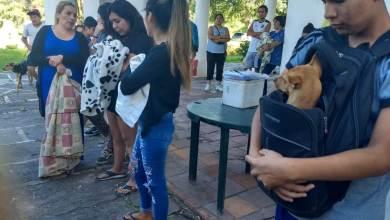 Photo of Esta semana fueron castrados 405 animales y vacunados 563