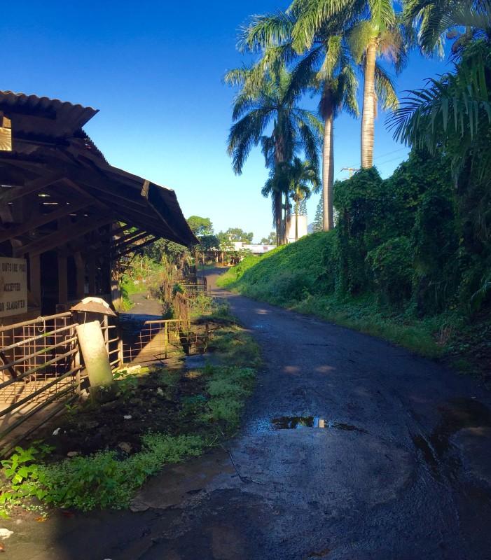 Shinsato Farm