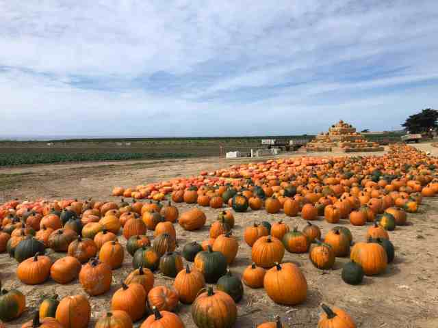 Seaside pumpkins