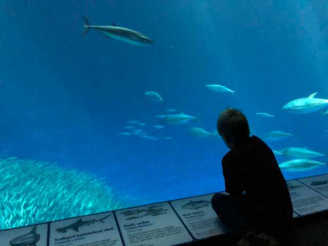 shadowed child watching fish in a large aquarium tank