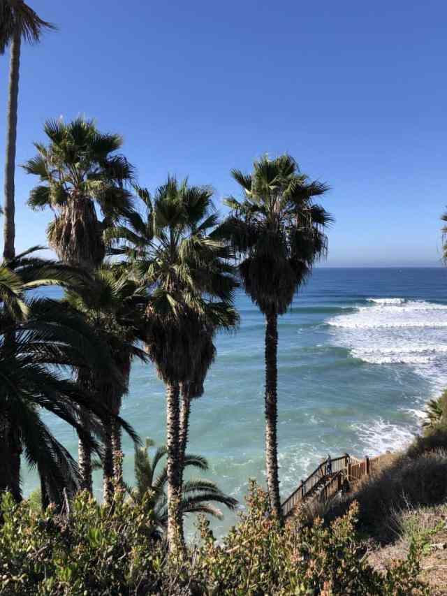 palm trees above a blue- green ocean with waves. Swamis beach in encinitas