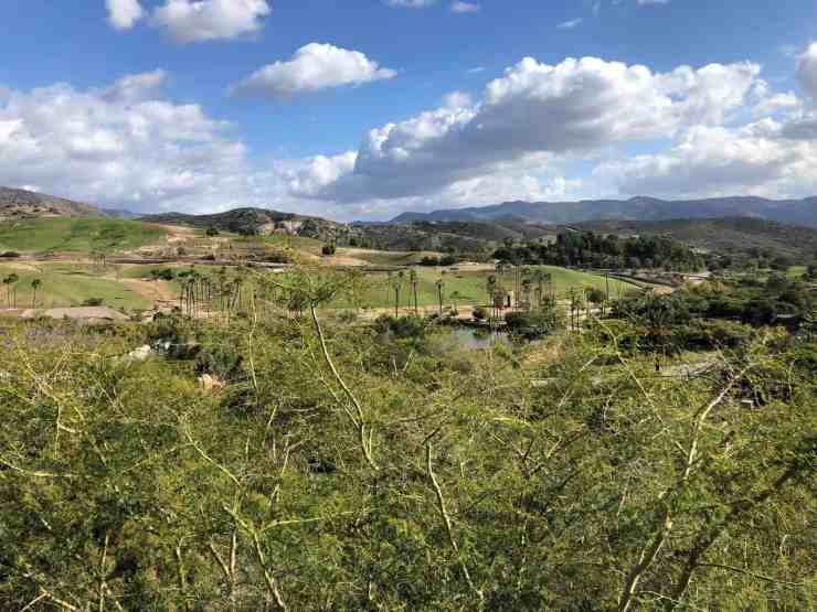 grassy hills and palm trees with puffy white clouds. the wild animal park in is a fun thing to do with kids in san diego