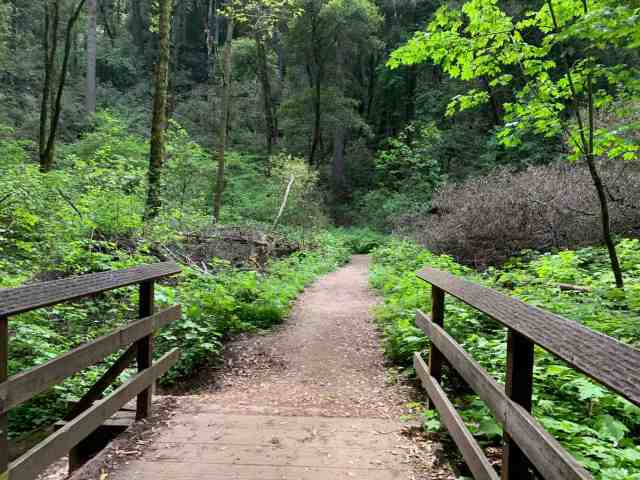 Wooden bridge leading into a green forest in Fall Creek State Park in Felton CA. Fall Creek is one of the best hiking spots in Santa Cruz