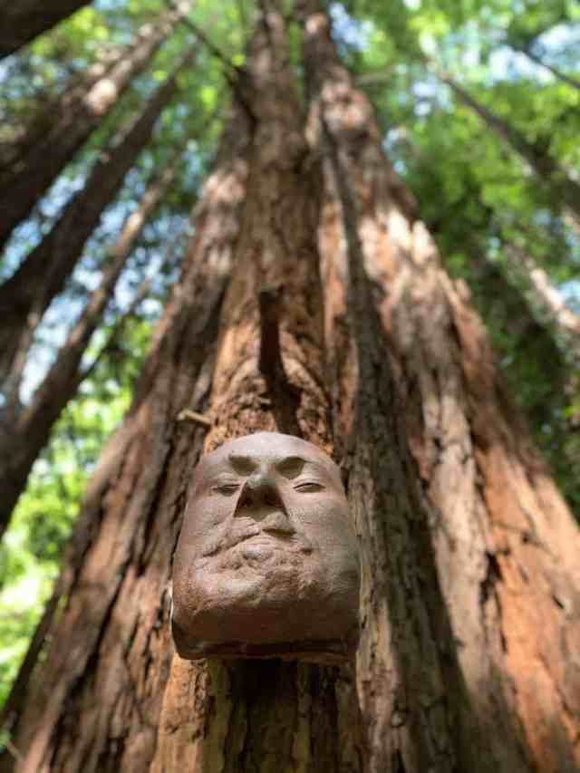 Face statue connected to a redwood tree in Nisene Marks State Park