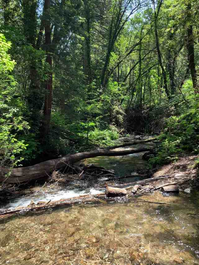 A narrow creek surrounded by trees and ferns in Fall Creek State Park in Felton CA